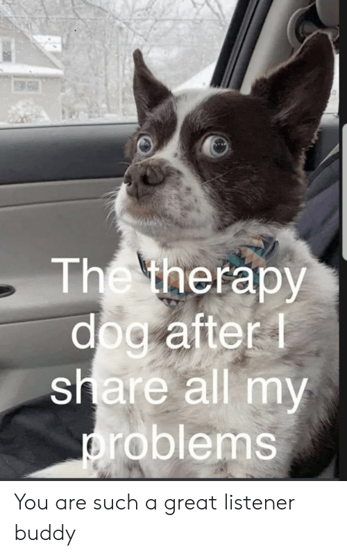 listener: The therapy  dog after  share all my  problems You are such a great listener buddy