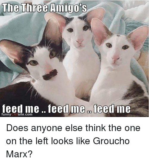 grouchos: The Three Amigo's  feed me feed ine OD  feed me  funny  site.com Does anyone else think the one on the left looks like Groucho Marx?