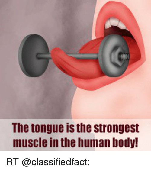 the tongue is the strongest muscle in the human body! rt | bodies, Cephalic Vein