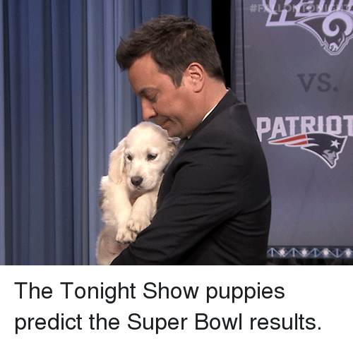 tonight show: The Tonight Show puppies predict the Super Bowl results.