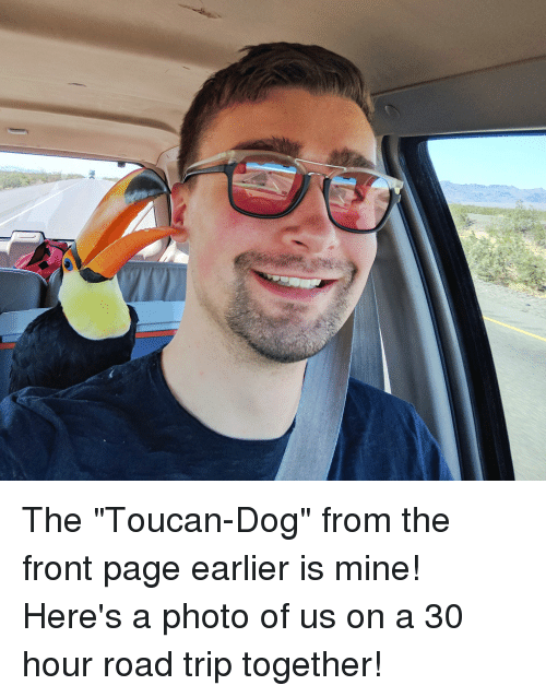 "Page, Dog, and Mine: The ""Toucan-Dog"" from the front page earlier is mine! Here's a photo of us on a 30 hour road trip together!"