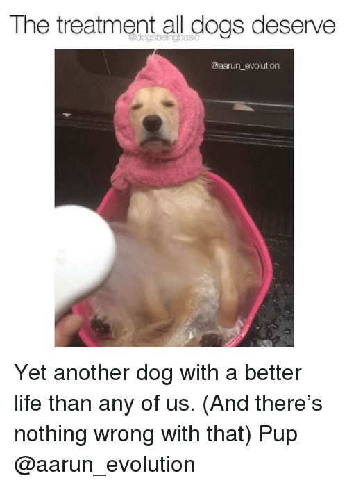 all dogs: The treatment all dogs deserve  @aarun_evolution Yet another dog with a better life than any of us. (And there's nothing wrong with that) Pup @aarun_evolution