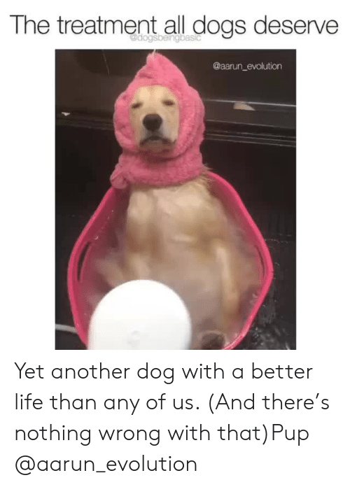 better life: The treatment all dogs deserve  @aarun_evolution Yet another dog with a better life than any of us. (And there's nothing wrong with that)Pup @aarun_evolution
