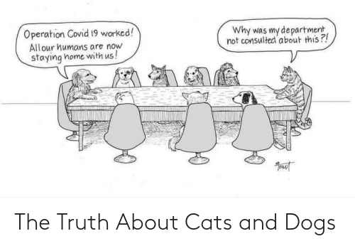 the truth: The Truth About Cats and Dogs