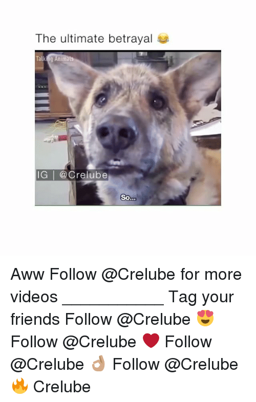 Aww, Friends, and Memes: The ultimate betrayal  IG | @Crelube  So Aww Follow @Crelube for more videos ___________ Tag your friends Follow @Crelube 😍 Follow @Crelube ❤ Follow @Crelube 👌🏽 Follow @Crelube 🔥 Crelube