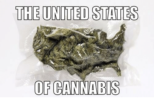 Cannabis: THE UNITED STATES  OF CANNABIS
