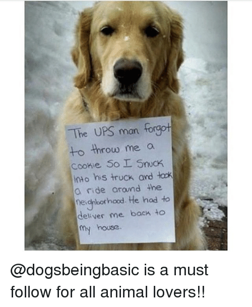 Memes, Ups, and Animal: The UPS man forgot  to throw me a  Cookie So SncK  into his truck and łock  a nide arand the  negiborhood. He hod to  deliver me back to  house @dogsbeingbasic is a must follow for all animal lovers!!