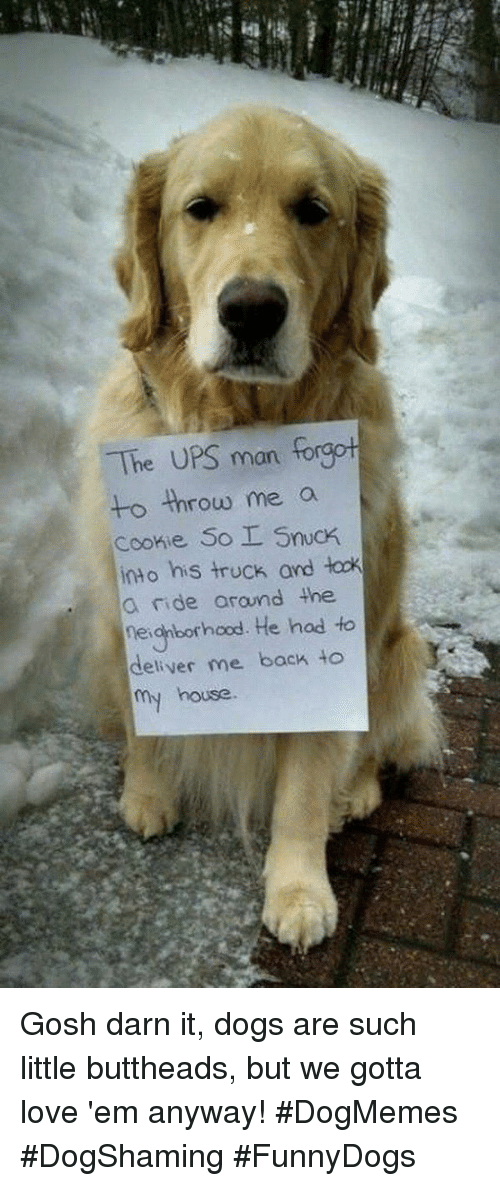 Darn It: The UPS man  to throw me a  Cconie So I Snuck  into his truck and łock  a ride arund the  eianborhood. He hod to  deliver me back to  my house. Gosh darn it, dogs are such little buttheads, but we gotta love 'em anyway! #DogMemes #DogShaming #FunnyDogs