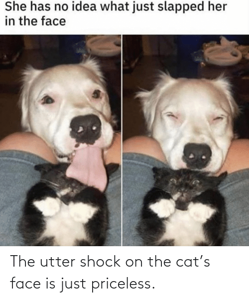 Is Just: The utter shock on the cat's face is just priceless.