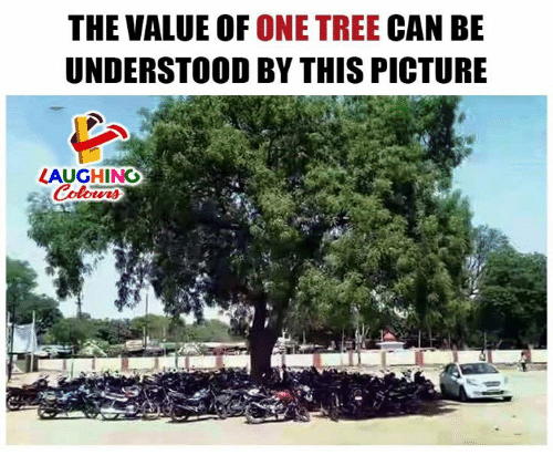 Tree, Indianpeoplefacebook, and Can: THE VALUE OF ONE TREE CAN BE  UNDERSTOOD BY THIS PICTURE  LAUGHING