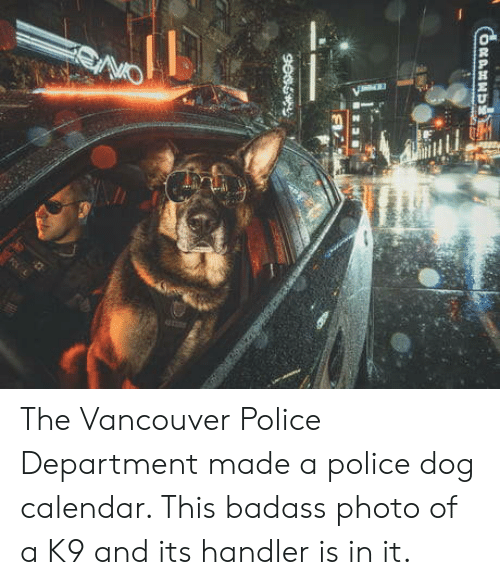 Vancouver: The Vancouver Police Department made a police dog calendar. This badass photo of a K9 and its handler is in it.