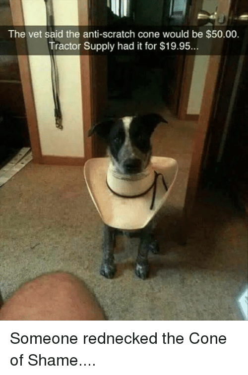 Memes, Redneck, and Scratch: The vet said the anti-scratch cone would be $50.00.  Tractor Supply had it for $19.95 Someone rednecked the Cone of Shame....