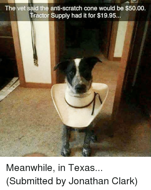 Scratch, Texas, and Clarks: The vet said the anti-scratch cone would be $50.00.  Tractor Supply had it for $19.95... Meanwhile, in Texas...  (Submitted by Jonathan Clark)