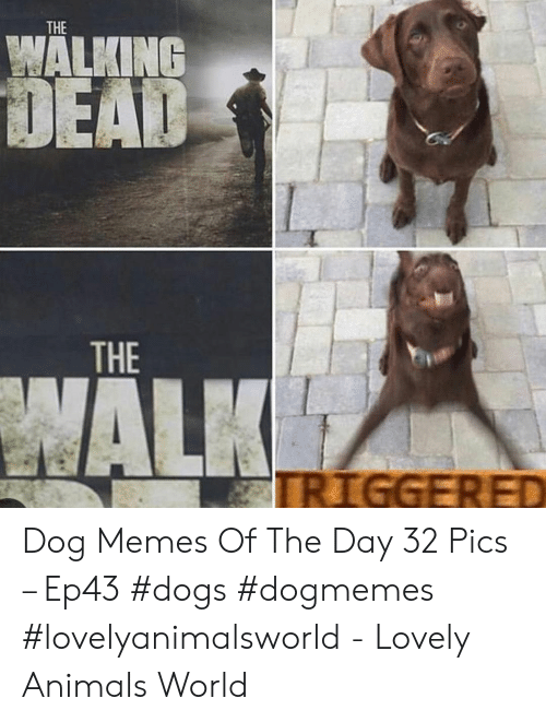 the walking: THE  WALKING  THE Dog Memes Of The Day 32 Pics – Ep43 #dogs #dogmemes #lovelyanimalsworld - Lovely Animals World