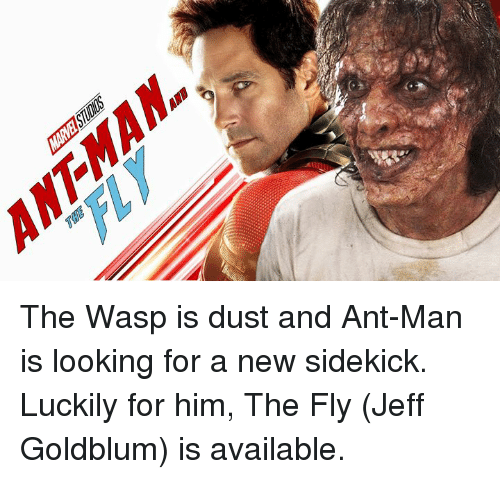 the wasp: The Wasp is dust and Ant-Man is looking for a new sidekick. Luckily for him, The Fly (Jeff Goldblum) is available.