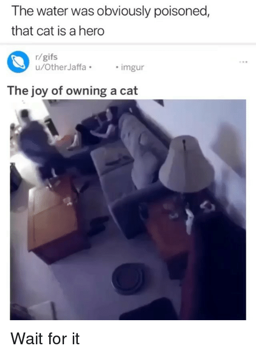 Memes, Gifs, and Water: The water was obviously poisoned,  that cat is a hero  r/gifs  u/OtherJaffaimgur  The joy of owning a cat Wait for it
