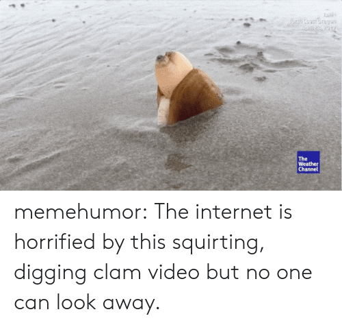 The Weather Channel: The  Weather  Channel memehumor:  The internet is horrified by this squirting, digging clam video but no one can look away.