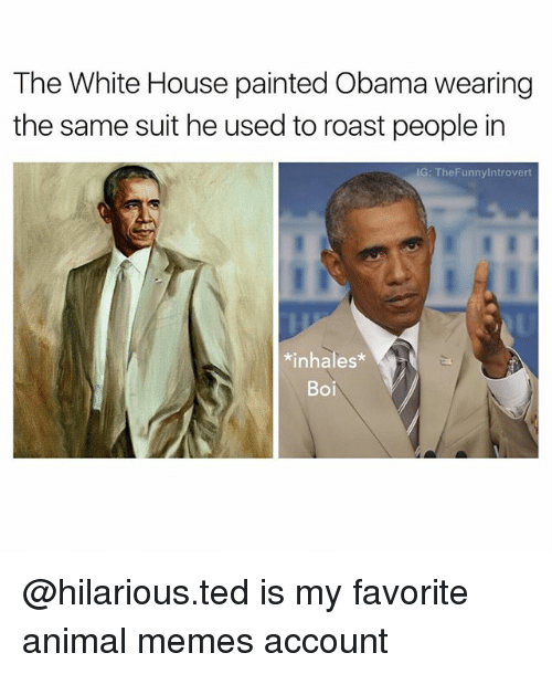Memes, Obama, and Roast: The White House painted Obama wearing  the same suit he used to roast people in  IG: The Funnylntrovert  nhales  Boi @hilarious.ted is my favorite animal memes account