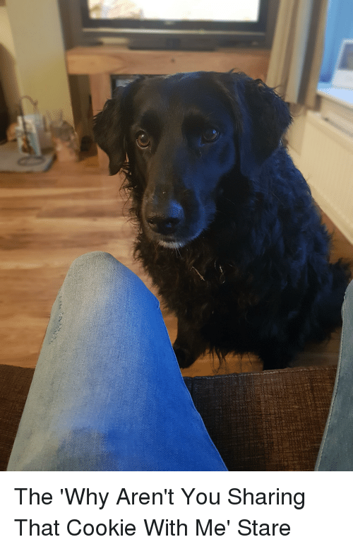 Not Sharing: The 'Why Aren't You Sharing That Cookie With Me' Stare