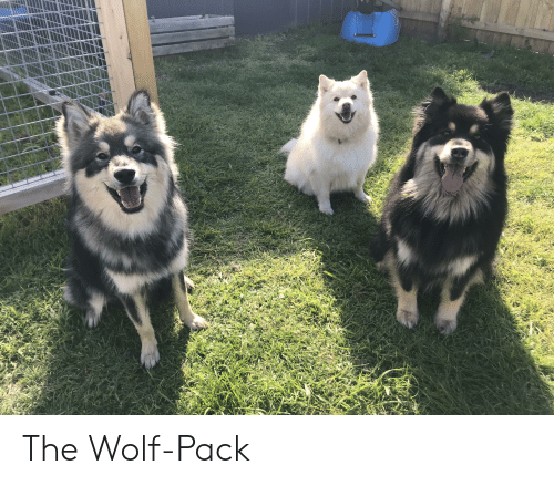 wolf pack: The Wolf-Pack