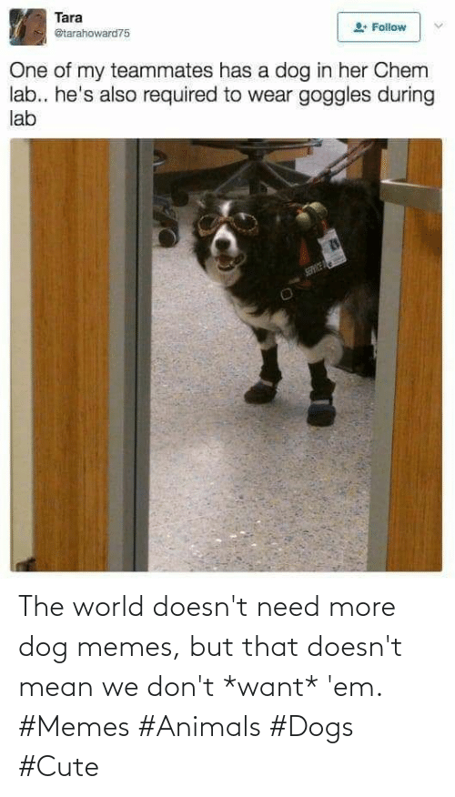 Doesnt: The world doesn't need more dog memes, but that doesn't mean we don't *want* 'em. #Memes #Animals #Dogs #Cute