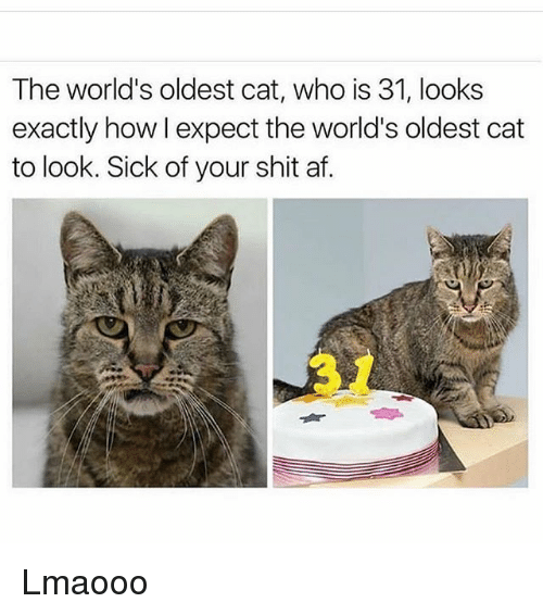 Af, Funny, and Shit: The world's oldest cat, who is 31, looks  exactly how I expect the world's oldest cat  to look. Sick of your shit af. Lmaooo