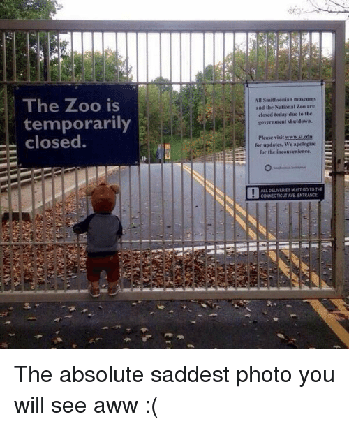 Memes, Connecticut, and Inconvenience: The Zoo is  temporarily  closed.  All Saithsonian museums  and the National Zoo are  closed today due to the  government shutdown.  Pleave visit www.siedu  for updates, We apologize  for the inconvenience.  ALLDELIVERES MUST GO TO THE  CONNECTICUT AVE ENTRANCE The absolute saddest photo you will see aww :(