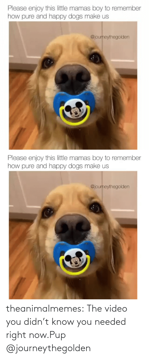 PUP: theanimalmemes:  The video you didn't know you needed right now.Pup @journeythegolden