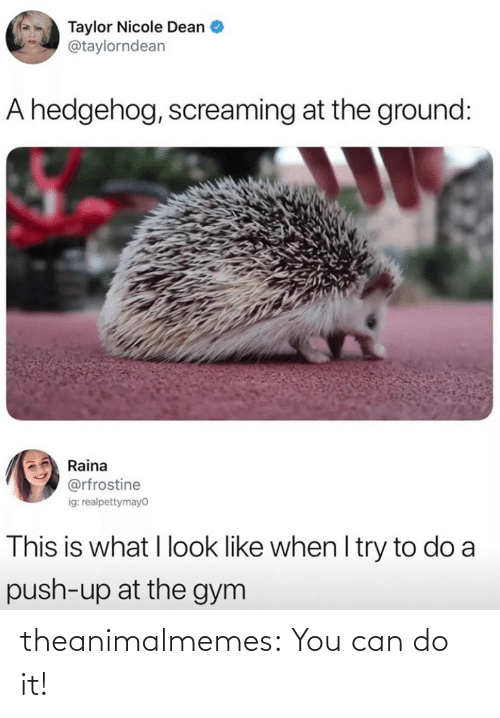 you can do it: theanimalmemes:  You can do it!