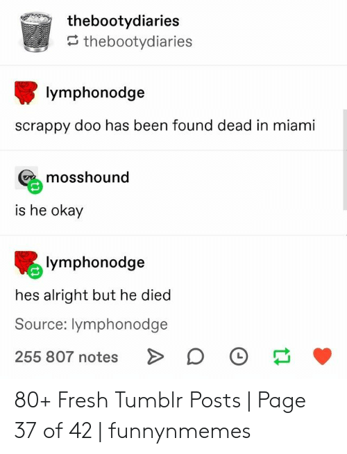 miami: thebootydiaries  thebootydiaries  lymphonodge  scrappy doo has been found dead in miami  mosshound  is he okay  lymphonodge  hes alright but he died  Source: lymphonodge  255 807 notes 80+ Fresh Tumblr Posts | Page 37 of 42 | funnynmemes