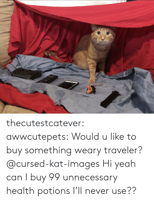 kat: thecutestcatever:  awwcutepets:  Would u like to buy something weary traveler?  @cursed-kat-images   Hi yeah can I buy 99 unnecessary health potions I'll never use??