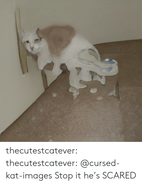 kat: thecutestcatever:  thecutestcatever:    @cursed-kat-images   Stop it he's SCARED