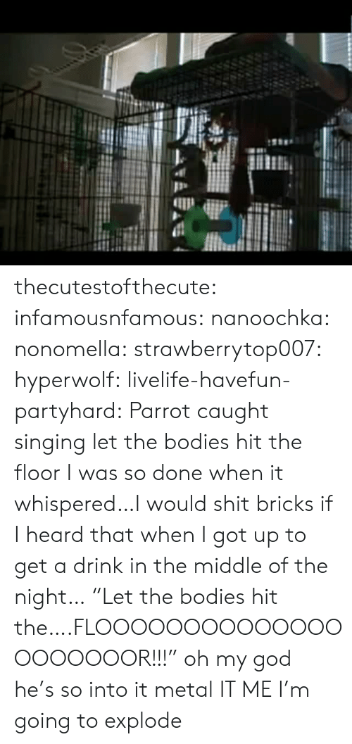 "Bodies : thecutestofthecute: infamousnfamous:   nanoochka:  nonomella:  strawberrytop007:  hyperwolf:  livelife-havefun-partyhard:  Parrot caught singing let the bodies hit the floor  I was so done when it whispered…I would shit bricks if I heard that when I got up to get a drink in the middle of the night…  ""Let the bodies hit the….FLOOOOOOOOOOOOOOOOOOOOOR!!!""  oh my god he's so into it  metal   IT ME   I'm going to explode"