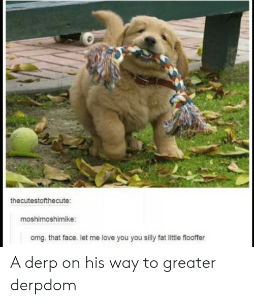 Me Love You: thecutestofthecute:  moshimoshimike:  omg. that face. let me love you you silly fat little flooffer A derp on his way to greater derpdom