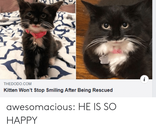 Wont Stop: THEDODO.COM  Kitten Won't Stop Smiling After Being Rescued awesomacious:  HE IS SO HAPPY