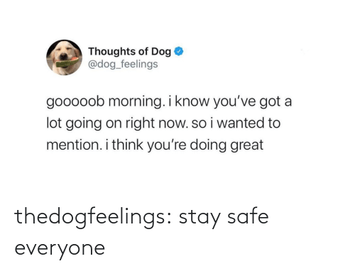 safe: thedogfeelings:  stay safe everyone