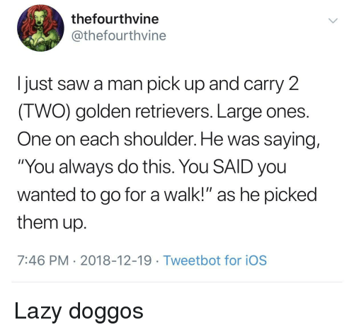 """golden retrievers: thefourthvine  @thefourthvine  I just saw a man pick up and carry 2  IWO) golden retrievers. Large ones  One on each shoulder. He was saying,  """"You always do this. You SAID you  wanted to go for a walk!"""" as he picked  them up  7:46 PM 2018-12-19 Tweetbot for ioS Lazy doggos"""