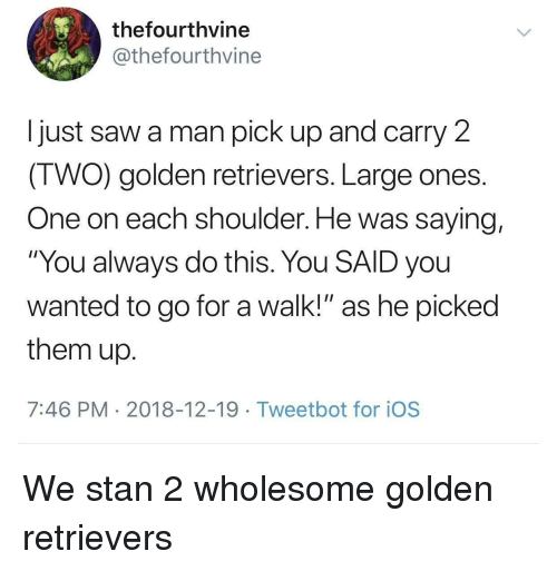 """ios: thefourthvine  @thefourthvine  I just saw a man pick up and carry 2  IWO) golden retrievers. Large ones  One on each shoulder. He was saying,  """"You always do this. You SAID you  wanted to go for a walk!"""" as he picked  them up  7:46 PM 2018-12-19 Tweetbot for ioS We stan 2 wholesome golden retrievers"""