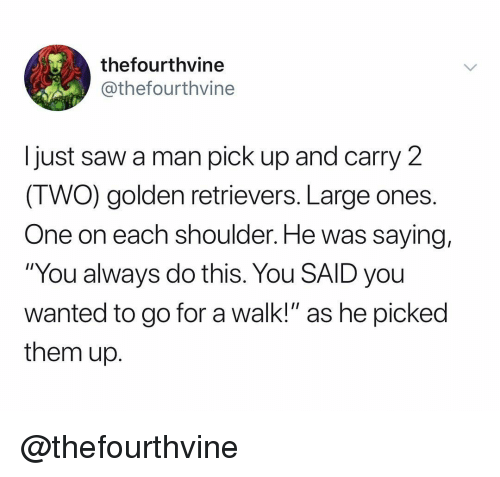 """golden retrievers: thefourthvine  @thefourthvine  Ijust saw a man pick up and carry 2  (TWO) golden retrievers. Large ones.  One on each shoulder. He was saying,  """"You always do this. You SAID you  wanted to go for a walk!"""" as he picked  them up. @thefourthvine"""