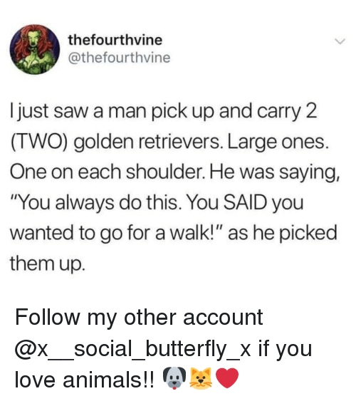 """golden retrievers: thefourthvine  @thefourthvine  Ijust saw a man pick up and carry 2  (TWO) golden retrievers. Large ones.  One on each shoulder. He was saying,  """"You always do this. You SAID you  wanted to go for a walk!"""" as he picked  them up. Follow my other account @x__social_butterfly_x if you love animals!! 🐶🐱❤"""