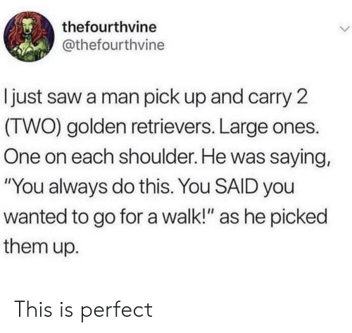 """golden retrievers: thefourthvine  @thefourthvine  just saw a man pick up and carry 2  (TWO) golden retrievers. Large ones.  One on each shoulder. He was saying,  """"You always do this. You SAID you  wanted to go for a walk!"""" as he picked  them up. This is perfect"""