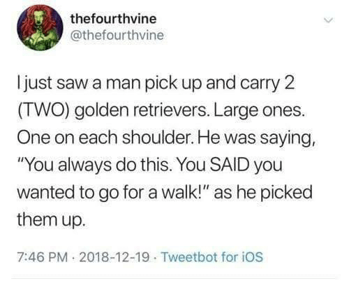"""golden retrievers: thefourthvine  @thefourthvine  ljust saw a man pick up and carry 2  (TWO) golden retrievers. Large ones.  One on each shoulder. He was saying,  """"You always do this. You SAID you  wanted to go for a walk!"""" as he picked  them up.  7:46 PM 2018-12-19 Tweetbot for iOS"""
