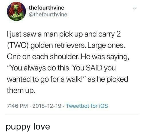 """golden retrievers: thefourthvine  @thefourthvine  ljust saw a man pick up and carry 2  (TWO) golden retrievers. Large ones.  One on each shoulder. He was saying,  """"You always do this. You SAID you  wanted to go for a walk!"""" as he picked  them up.  7:46 PM 2018-12-19 Tweetbot for iOS puppy love"""