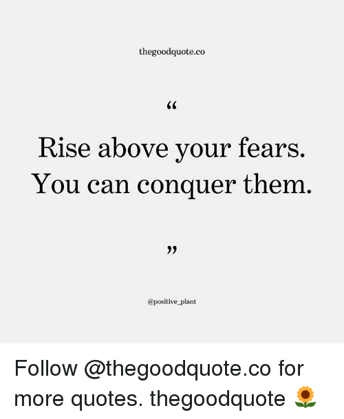 Rise Above: thegoodquote.co  Rise above vour fears.  You can conquer them  @positive plant Follow @thegoodquote.co for more quotes. thegoodquote 🌻