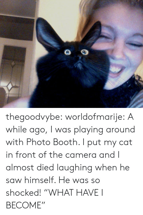 """Almost Died: thegoodvybe: worldofmarije:  A while ago, I was playing around with Photo Booth. I put my cat in front of the camera and I almost died laughing when he saw himself. He was so shocked!  """"WHAT HAVE I BECOME"""""""