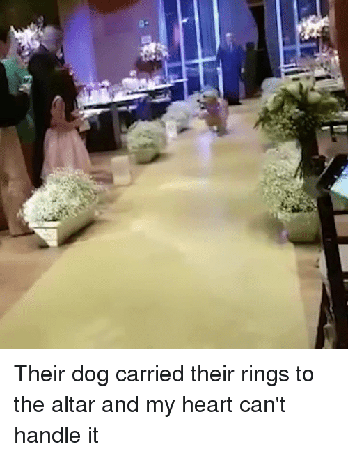 Heart, Dog, and Rings: Their dog carried their rings to the altar and my heart can't handle it