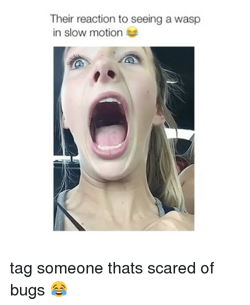 Slow Motion, Tag Someone, and Girl Memes: Their reaction to seeing a wasp  in slow motion tag someone thats scared of bugs 😂