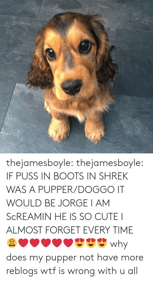 pupper: thejamesboyle: thejamesboyle:  IF PUSS IN BOOTS IN SHREK WAS A PUPPER/DOGGO IT WOULD BE JORGE I AM ScREAMIN HE IS SO CUTE I ALMOST FORGET EVERY TIME 😩❤️❤️❤️❤️❤️😍😍😍  why does my pupper not have more reblogs wtf is wrong with u all