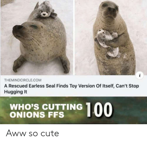 cutting: THEMINDCIRCLE.COM  A Rescued Earless Seal Finds Toy Version Of Itself, Can't Stop  Hugging It  WHO'S CUTTING  ONIONS FFS  00 Aww so cute