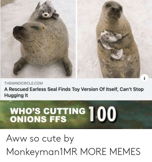 cutting: THEMINDCIRCLE.COM  A Rescued Earless Seal Finds Toy Version Of Itself, Can't Stop  Hugging It  WHO'S CUTTING  ONIONS FFS  00 Aww so cute by Monkeyman1MR MORE MEMES
